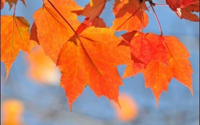 The best way to add color to your yard in Fall