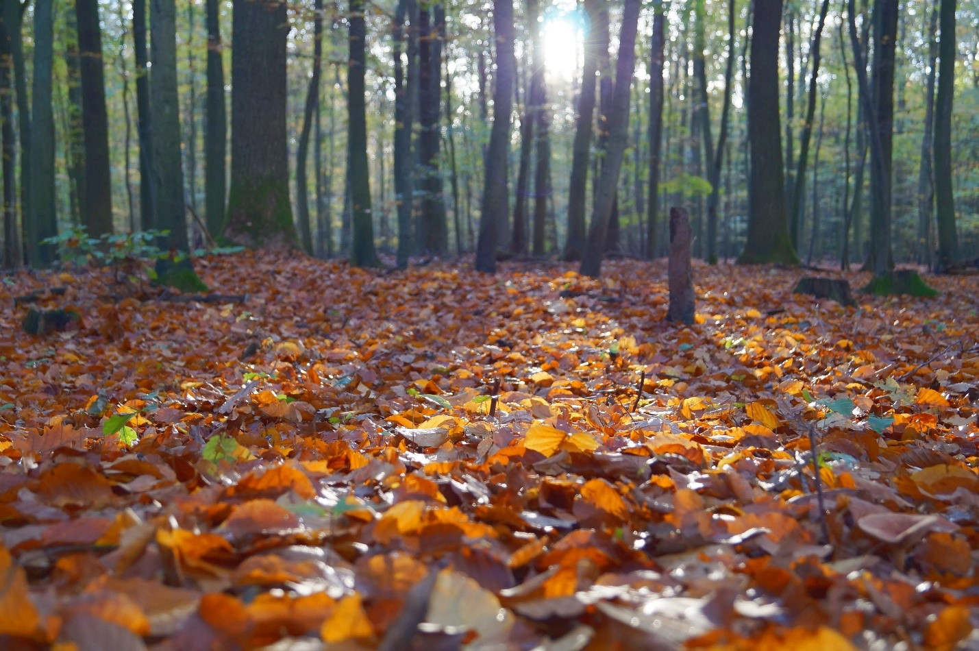 Tree Removal Service Near Me 32459 - Autum Leaves Ground Cover IMG