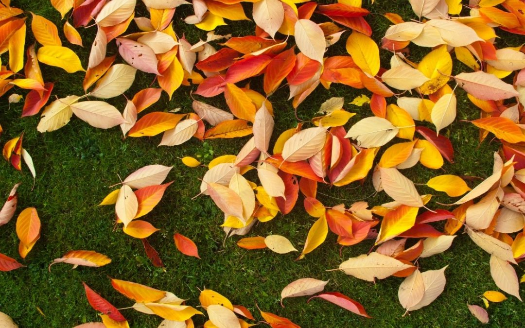 Benefits of Composting Your Tree's Fall Leaves